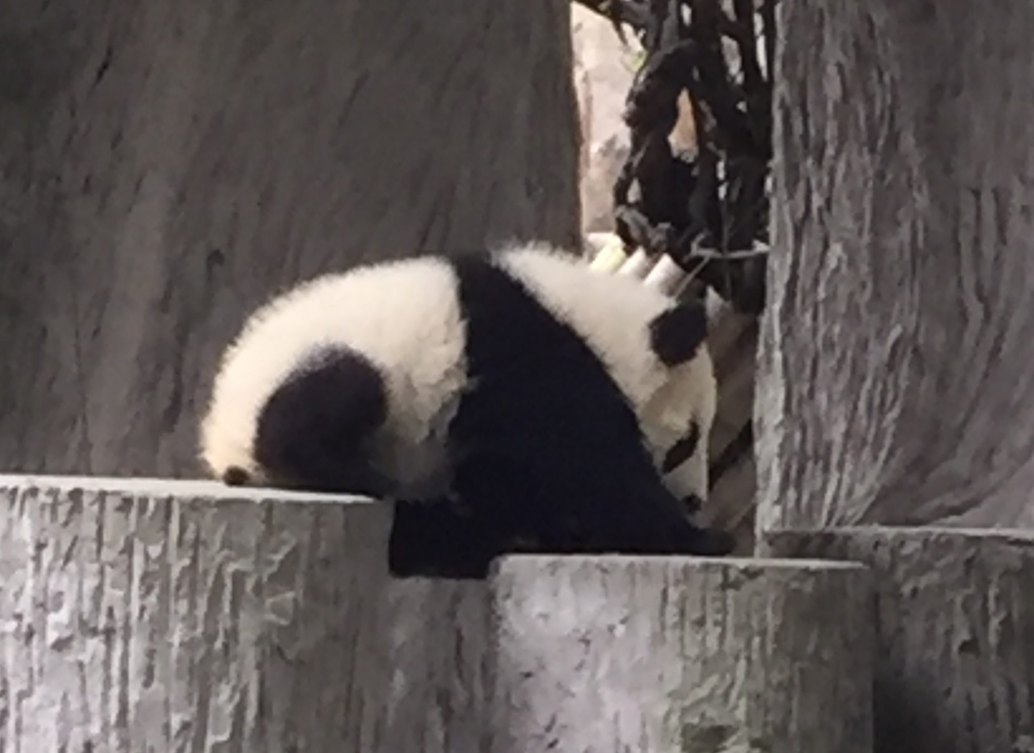 """Master Worker, Take Me to the Pandas"" – A Story of Chengdu"